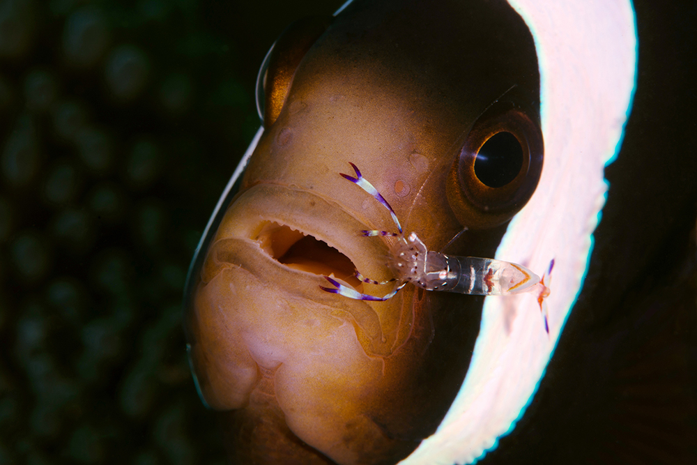 Diving Jemeluk bay