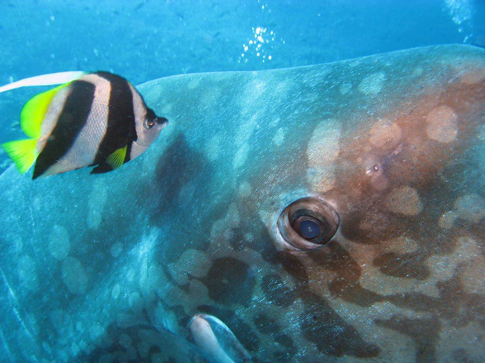 Plongée Cristal bay